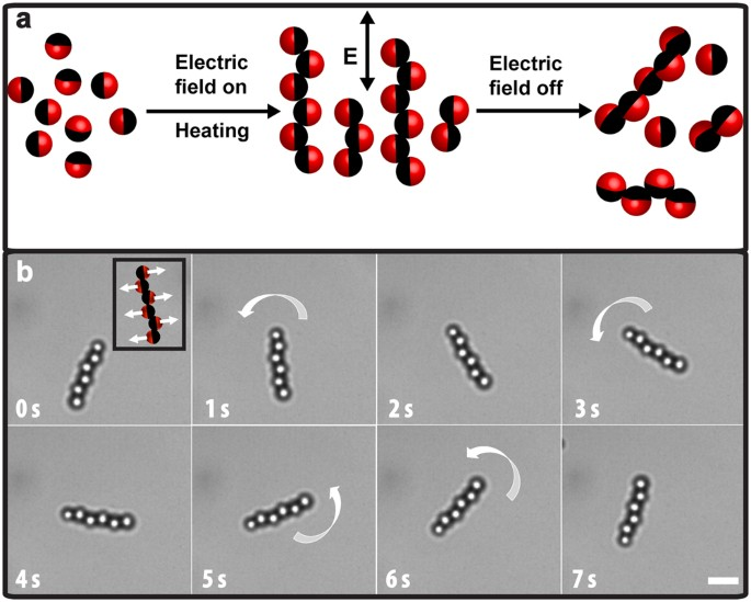 Rational Design And Dynamics Of Self Propelled Colloidal Bead Chains