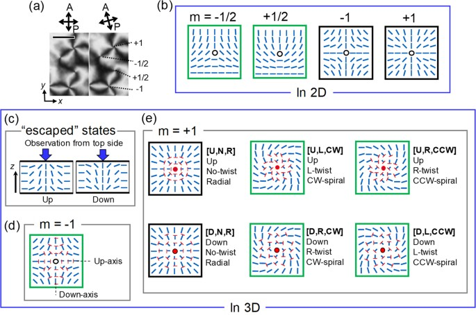 Uncovering Different States Of Topological Defects In