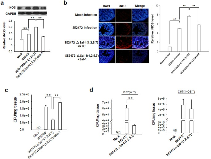 Salmonella Small Rna Fragment Sal 1 Facilitates Bacterial Survival