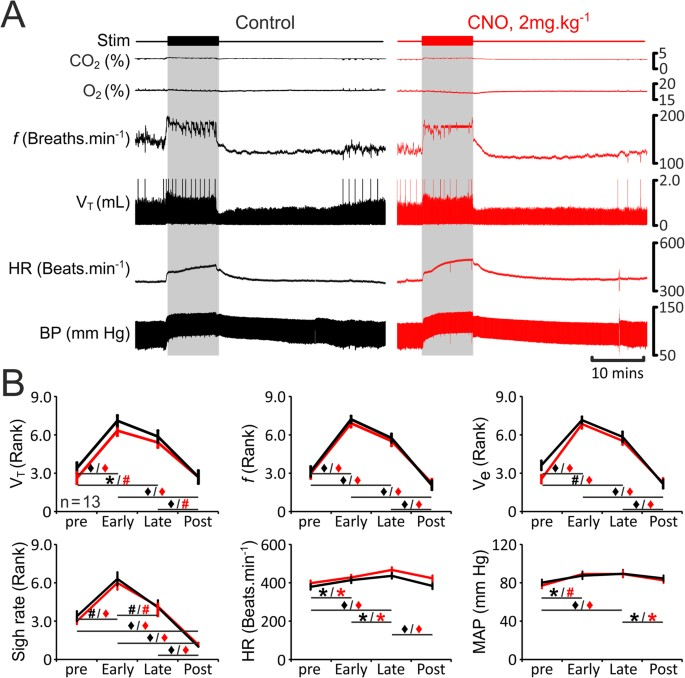 The Role Of Parafacial Neurons In The Control Of Breathing During ...