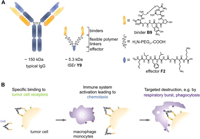 synthetic integrin binding immune stimulators target cancer cells
