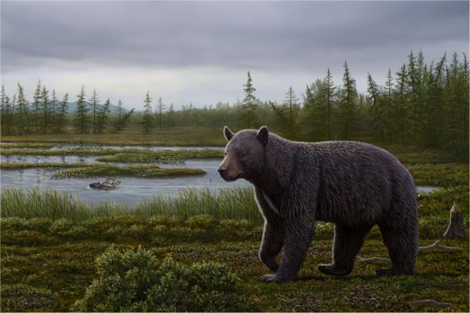 A Basal Ursine Bear Protarctos Abstrusus From The Pliocene High