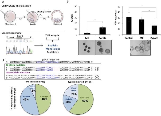 crispr cas9 microinjection in oocytes disables pancreas development