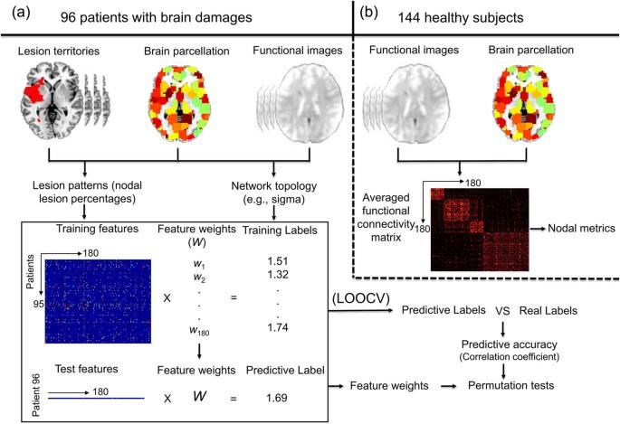 Brain hubs in lesion models: Predicting functional network ...