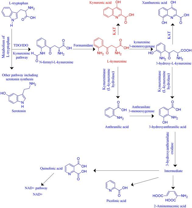 inhibition of human kynurenine aminotransferase isozymes