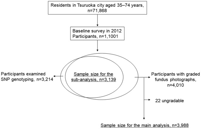 Gender-specific association of early age-related macular