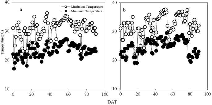 Root Morphological Traits and Spatial Distribution under