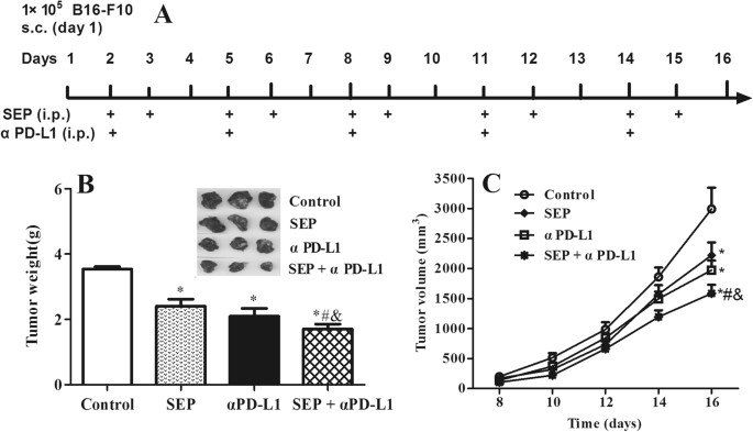 Combined SEP and anti-PD-L1 antibody produces a ...