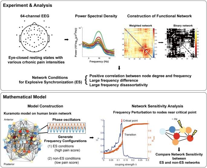 Functional Brain Network Mechanism Of Hypersensitivity In Chronic