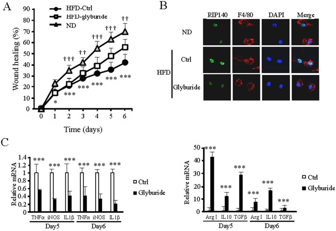 Glyburide and retinoic acid synergize to promote wound