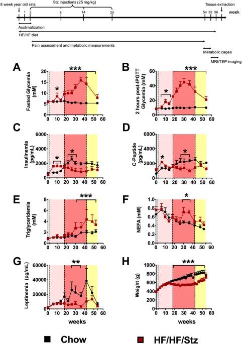 high fat diet streptozotocin mice heart