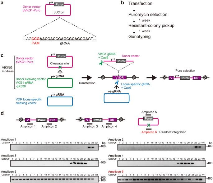 Development of versatile non-homologous end joining-based