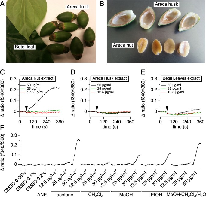 Areca nut extracts mobilize calcium and release pro-inflammatory