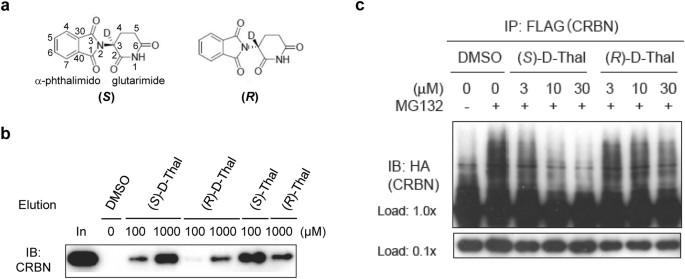 Structural basis of thalidomide enantiomer binding to