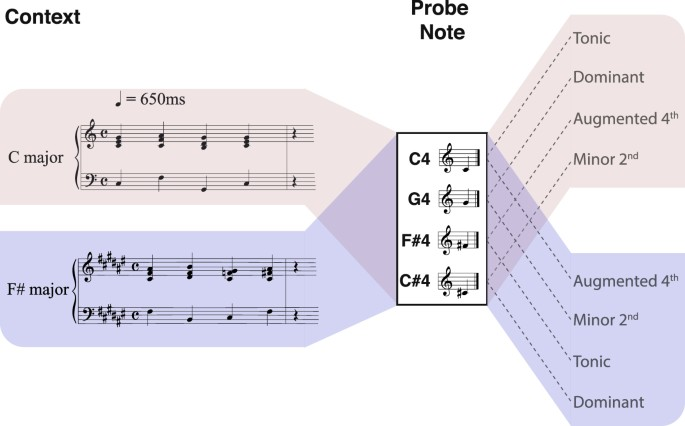 Decoding the dynamic representation of musical pitch from human ...
