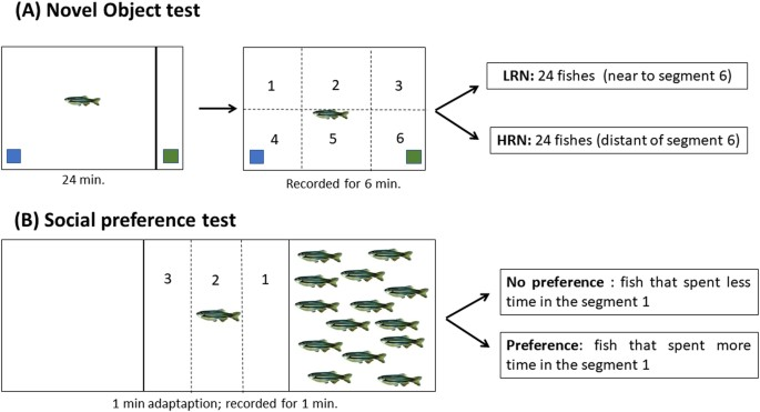 First description of behavior and immune system relationship in fish social preference test maxwellsz