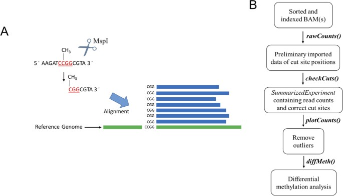 Msgbsr An R Package For Analysing Methylation Sensitive