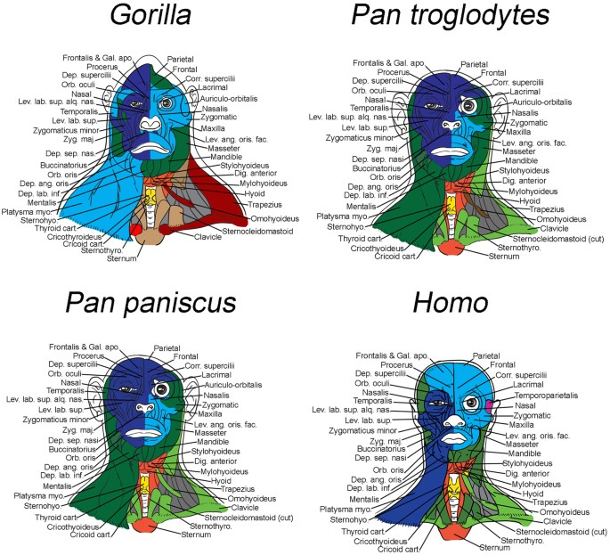Primate Modularity And Evolution First Anatomical Network Analysis
