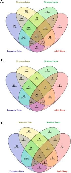 Developmental Maturation And Alpha 1 Adrenergic Receptors Mediated