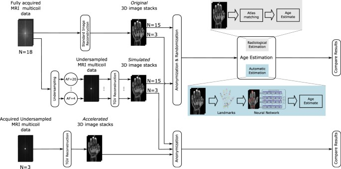 Reducing Acquisition Time For MRI Based Forensic Age