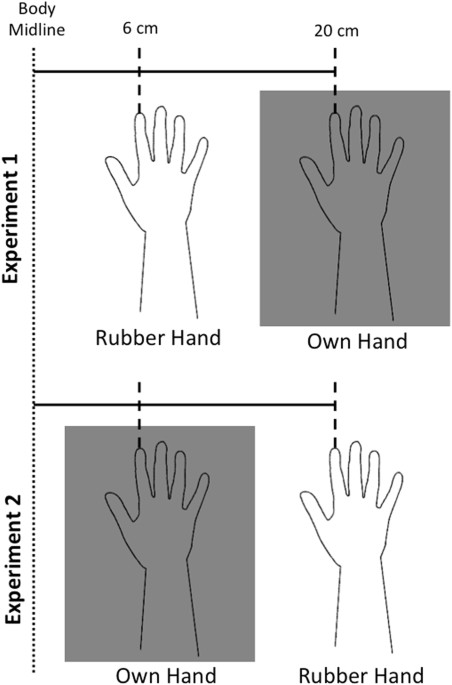 Set Up In The Two Experiments This Schematic Representation Shows That The Position Of The Own And Rubber Hand Was Inter Changed In The Two Experiments