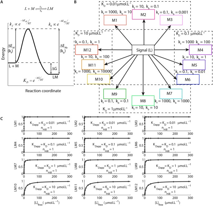 Molecular mechanisms of detection and discrimination of dynamic