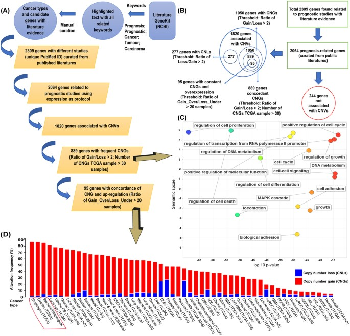 Cancer Gene Twice As Likely To Be >> Identification Of Novel Prognosis Related Genes Associated With
