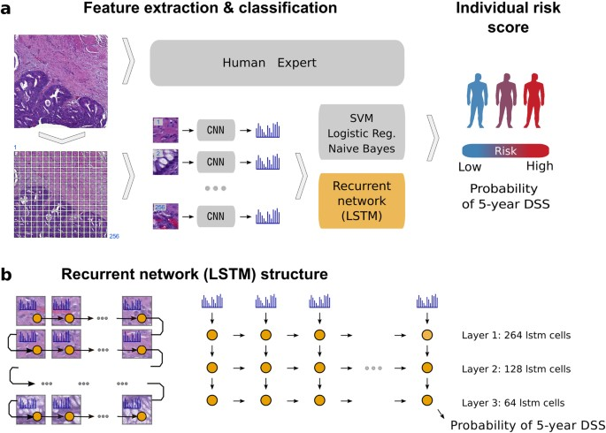 Deep Learning Based Tissue Analysis Predicts Outcome In
