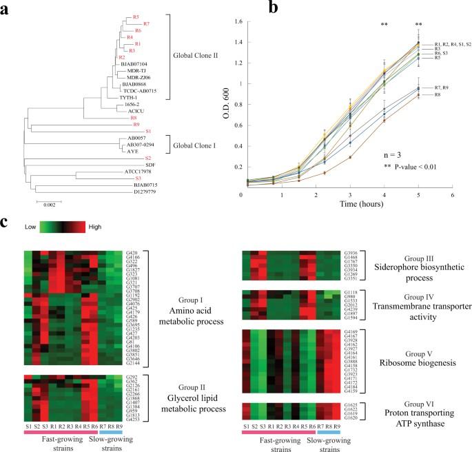 Comparative transcriptomics of multidrug-resistant Acinetobacter