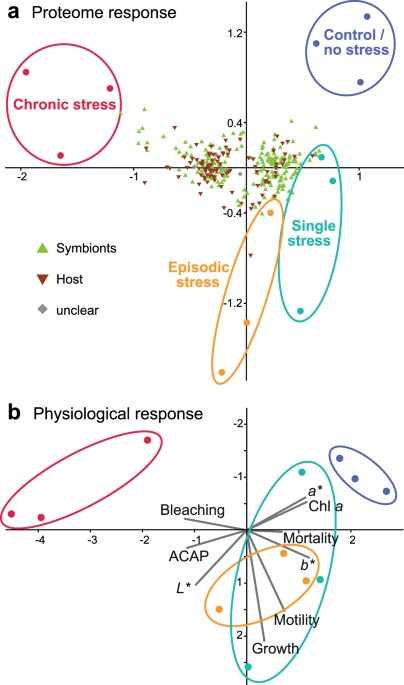 Disentangling Thermal Stress Responses In A Reef Calcifier And Its