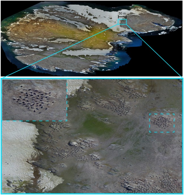 Researchers used the images captured by unmanned aerial vehicle (UAV) to count the penguins on Danger Islands.