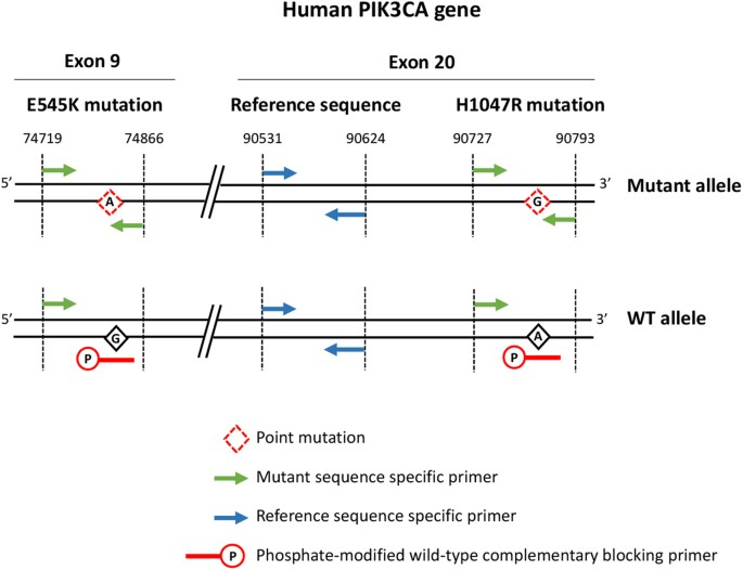 A Simple And Robust Real Time Qpcr Method For The Detection Of Pik3ca Mutations Scientific Reports