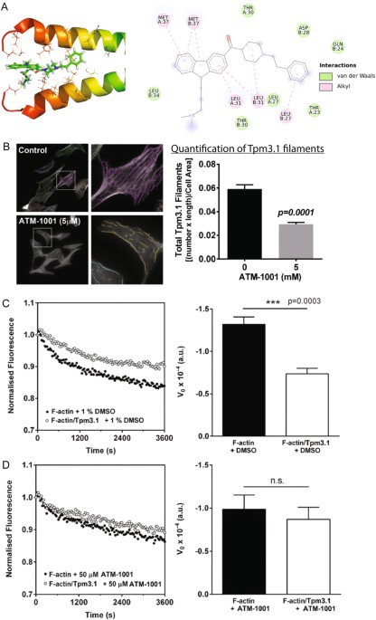 On-target action of anti-tropomyosin drugs regulates glucose