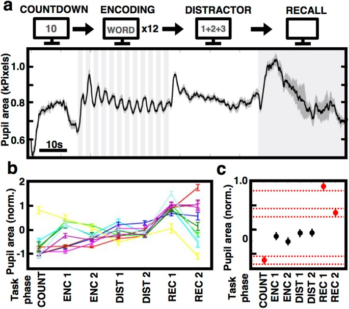 Pupil size reflects successful encoding and recall of memory