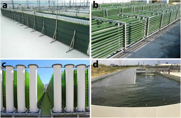 Scale Up And Large Scale Production Of Tetraselmis Sp Ctp4 Chlorophyta For Co 2 Mitigation From An Agar Plate To 100 M 3 Industrial Photobioreactors Scientific Reports