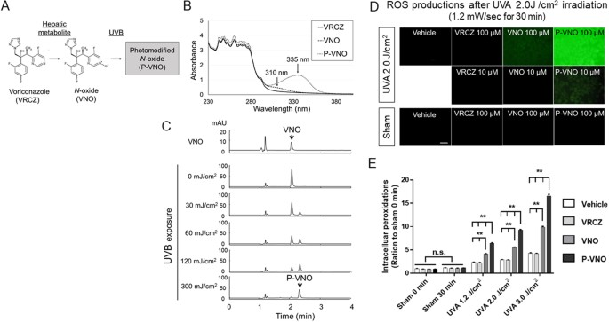 Voriconazole-induced photocarcinogenesis is promoted by aryl