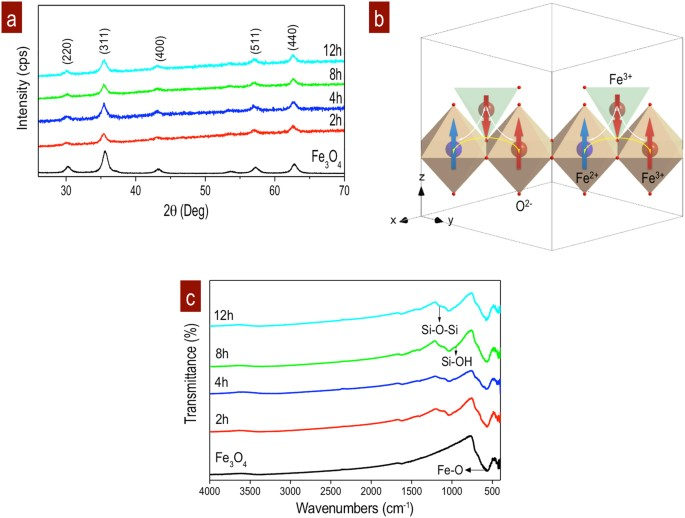 Magnetic domain interactions of Fe 3 O 4 nanoparticles