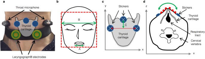 Non Invasive Quantification Of Human Swallowing Using A Simple