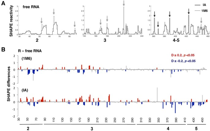 8eb9fa306213 (A) Reactivity patterns for IA (black) and 1M6 (gray) reagents obtained  after QuSHAPE software processing for representative regions ...