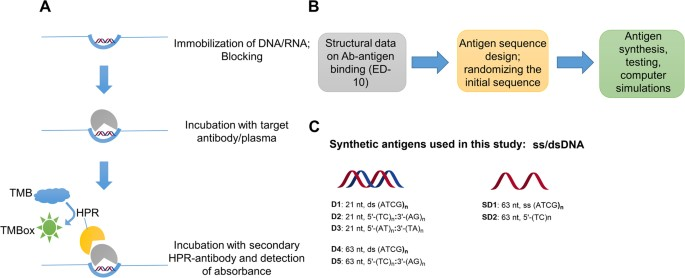 Autoantibody Profiling in Lupus Patients using Synthetic Nucleic