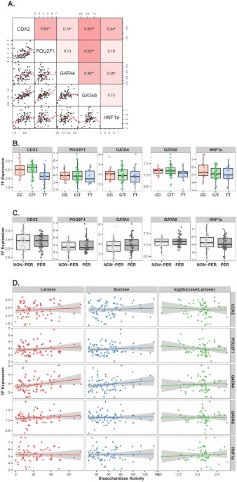 Differences In Dna Methylation And Functional Expression In Lactase
