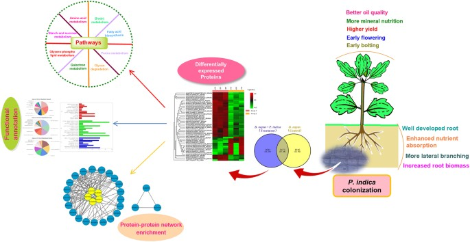 Proteomic approach to understand the molecular physiology of ... on