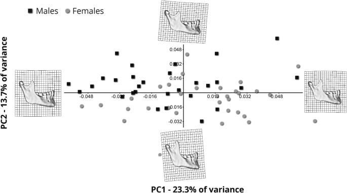 Human mandibular shape is associated with masticatory muscle force ...