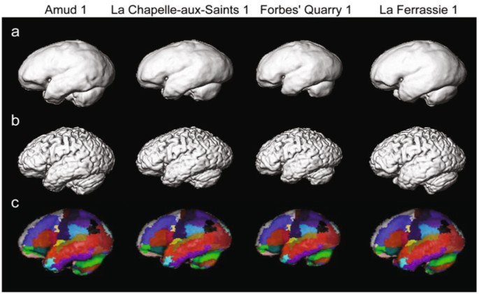 Reconstructing the Neanderthal brain using computational
