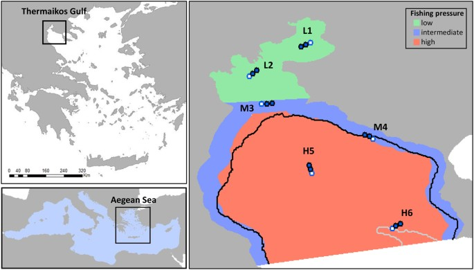 Spatial fishing restrictions benefit demersal stocks in the ...