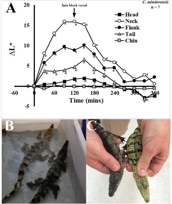Crocodiles Alter Skin Color In Response To Environmental Color