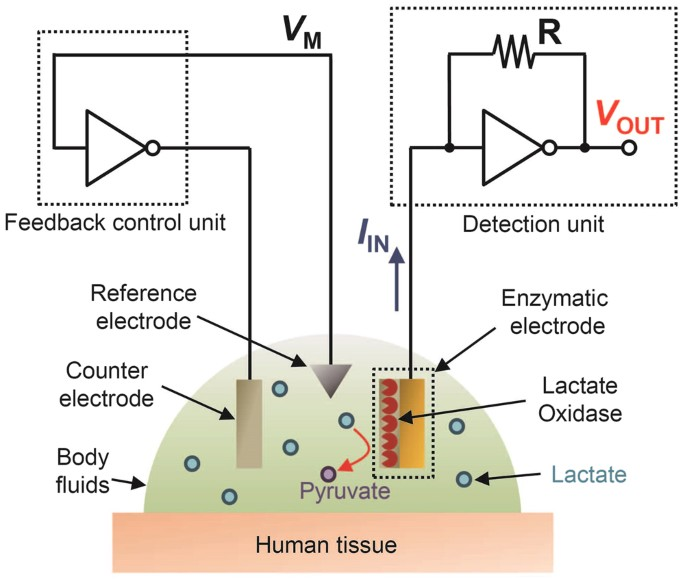Sensational A Printed Organic Circuit System For Wearable Amperometric Wiring Cloud Hisonuggs Outletorg