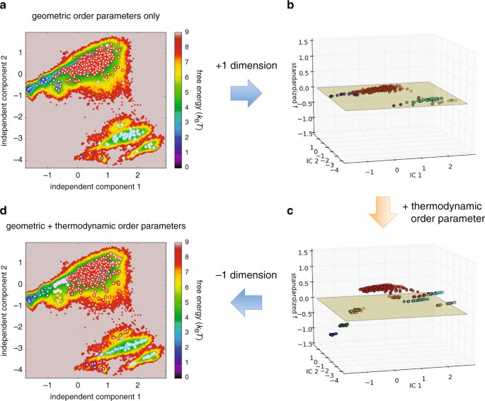 examining a thermodynamic order parameter of protein folding