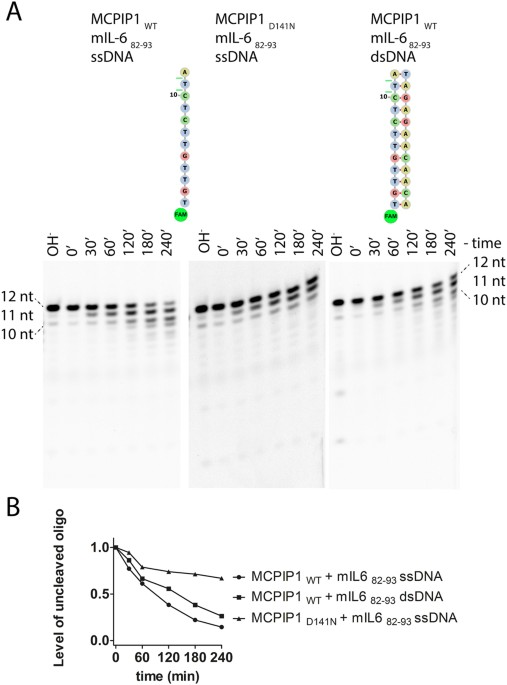 Substrate specificity of human MCPIP1 endoribonuclease | Scientific ...