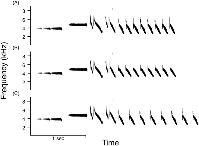 Urban sparrows respond to a sexually selected trait with